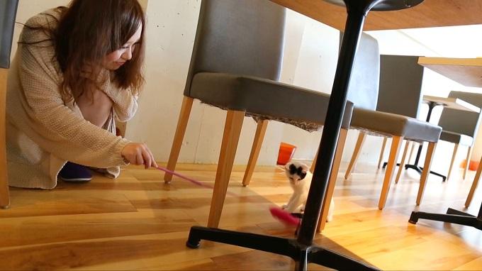 子猫と戯れるチェンチェン